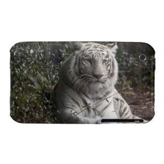 tiger iPhone 3 cover