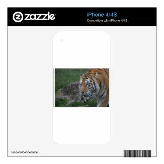 Tiger iPhone 4 Skins