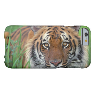 Tiger iPhone 6/6s Barely There iPhone 6 Case