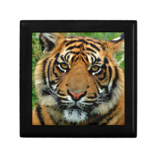Tiger Jewelry Box