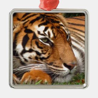 Tiger.jpg Metal Ornament