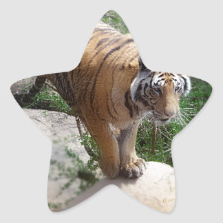 Tiger Jumping Stickers