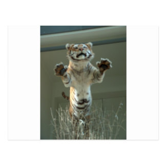 Tiger jumps at you Press Paws Postcard