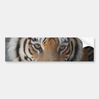 Tiger Kisses Bumper Sticker Car Bumper Sticker