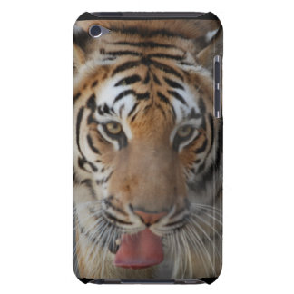 Tiger Kisses iTouch Case Barely There iPod Covers