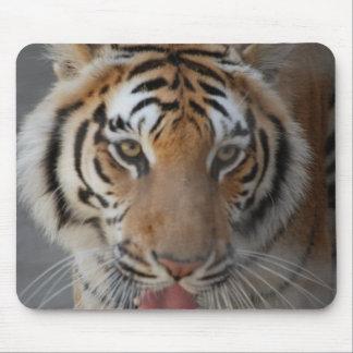 Tiger Kisses Mouse Pad