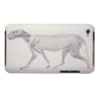 Tiger: Lateral View, Partially Dissected, from the iPod Touch Case-Mate Case