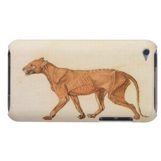 Tiger, Lateral View, Skin Removed, from 'A Compara Barely There iPod Cover