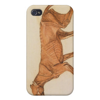 Tiger, Lateral View, Skin Removed, from 'A Compara iPhone 4/4S Case