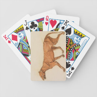 Tiger Lateral View Skin Removed from A Compara Bicycle Playing Cards