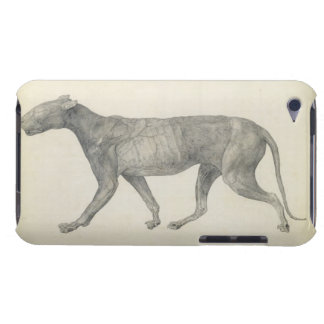 Tiger: Lateral View, with Skin and Tissue Removed, iPod Case-Mate Cases