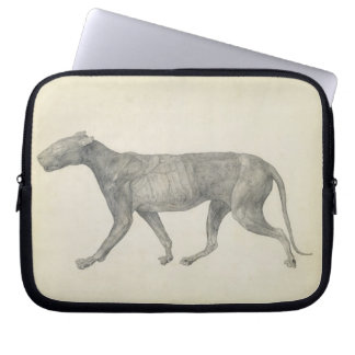 Tiger: Lateral View, with Skin and Tissue Removed, Laptop Sleeve