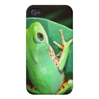 Tiger Leg Monkey Frog, Phyllomedusa Cover For iPhone 4
