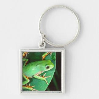 Tiger Leg Monkey Frog, Phyllomedusa Key Chains