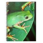 Tiger Leg Monkey Frog, Phyllomedusa Note Book