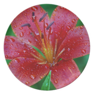 Tiger Lilly after the Rain Party Plate
