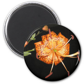 Tiger Lilly on Black Background 2 Inch Round Magnet