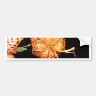 Tiger Lilly on Black Background Bumper Sticker