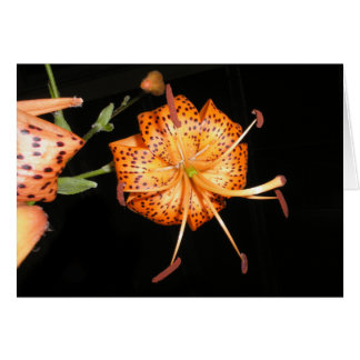 Tiger Lilly on Black Background Card