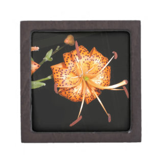 Tiger Lilly on Black Background Gift Box
