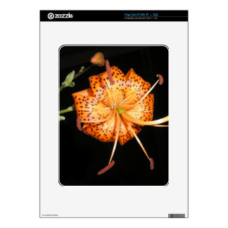 Tiger Lilly on Black Background iPad Skins