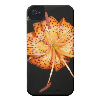 Tiger Lilly on Black Background iPhone 4 Case-Mate Case