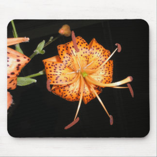Tiger Lilly on Black Background Mouse Pad