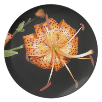 Tiger Lilly on Black Background Plate