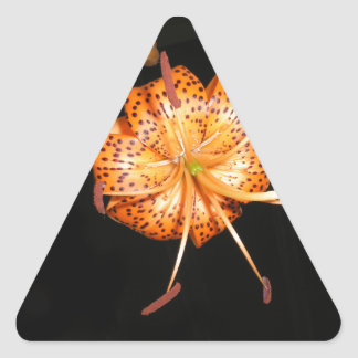 Tiger Lilly on Black Background Triangle Sticker