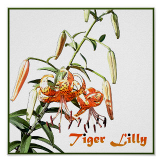 Tiger Lilly Poster
