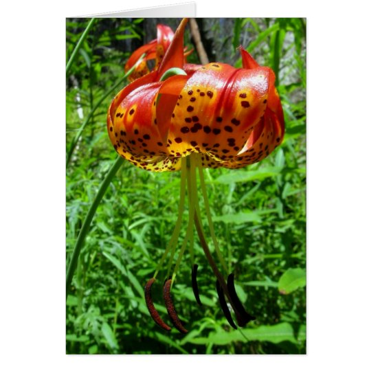 Tiger Lily 01 Card