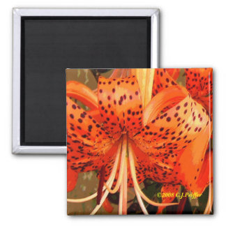 'Tiger Lily' 2 Inch Square Magnet