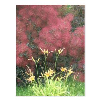 Tiger Lily and Smoke Tree Postcard