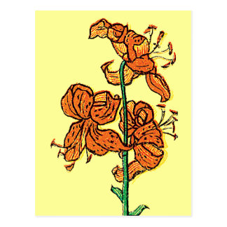 Tiger Lily by Kate Greenaway Postcard