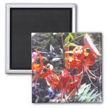 Tiger Lily Collection Refrigerator Magnets