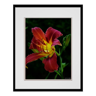 Tiger lily flower picture poster