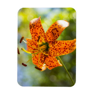 Tiger Lily Front View Magnet