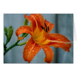Tiger Lily Greeting Cards