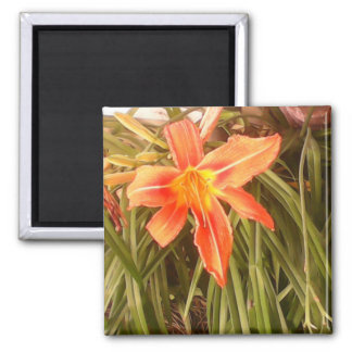 tiger lily magnet