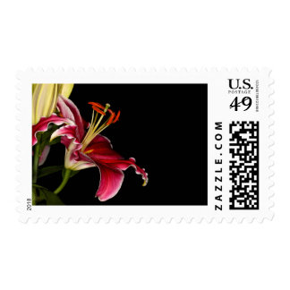 Tiger Lily Postage