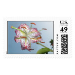 tiger lily stamps