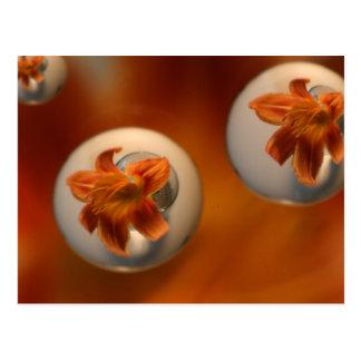 Tiger Lily Water Droplets Postcard