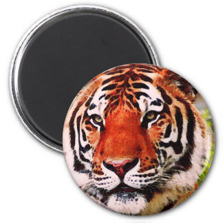 Tiger Look Magnet