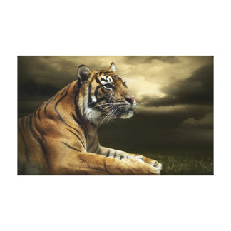 Tiger looking and sitting under dramatic sky gallery wrap canvas