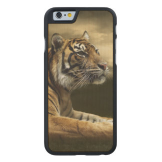 Tiger looking and sitting under dramatic sky carved® maple iPhone 6 case