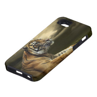 Tiger looking and sitting under dramatic sky iPhone SE/5/5s case