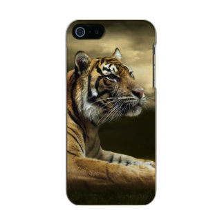 Tiger looking and sitting under dramatic sky metallic phone case for iPhone SE/5/5s