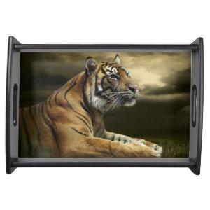 Tiger Big Cat
