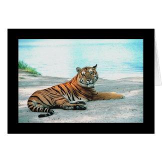 Tiger Lounge Greeting Card