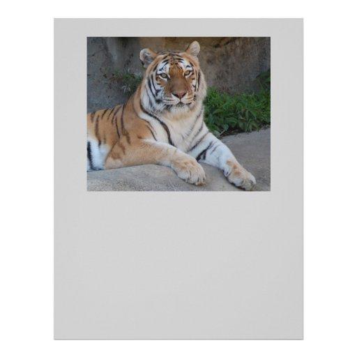 Tiger Love Letterhead